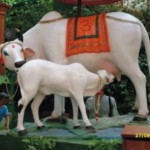Cow-in-Mahatma-Gandhi-150x150