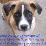 DOG HARISH RAWAT