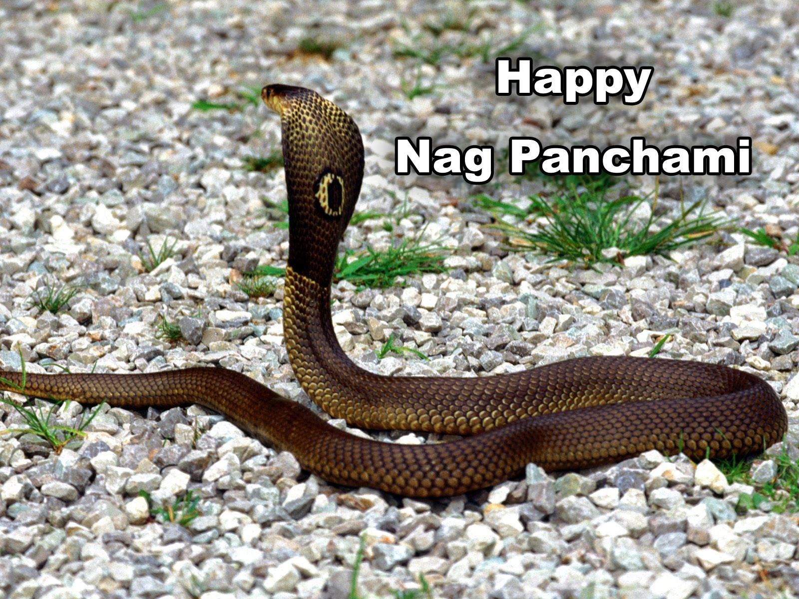 Nag-panchami-